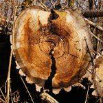 las maderas y sus clases y tipos