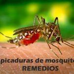 todo sobre los mosquitos, las picaduras y posibles remedios
