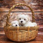 tiempo de duracion embarazo perro