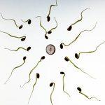 tiempo que dura un espermatozoide fuera del hombre