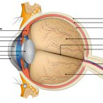 partes-y-anatomia-del-ojo-humano